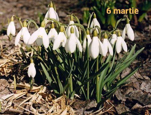 Istoria zilei – 6 martie