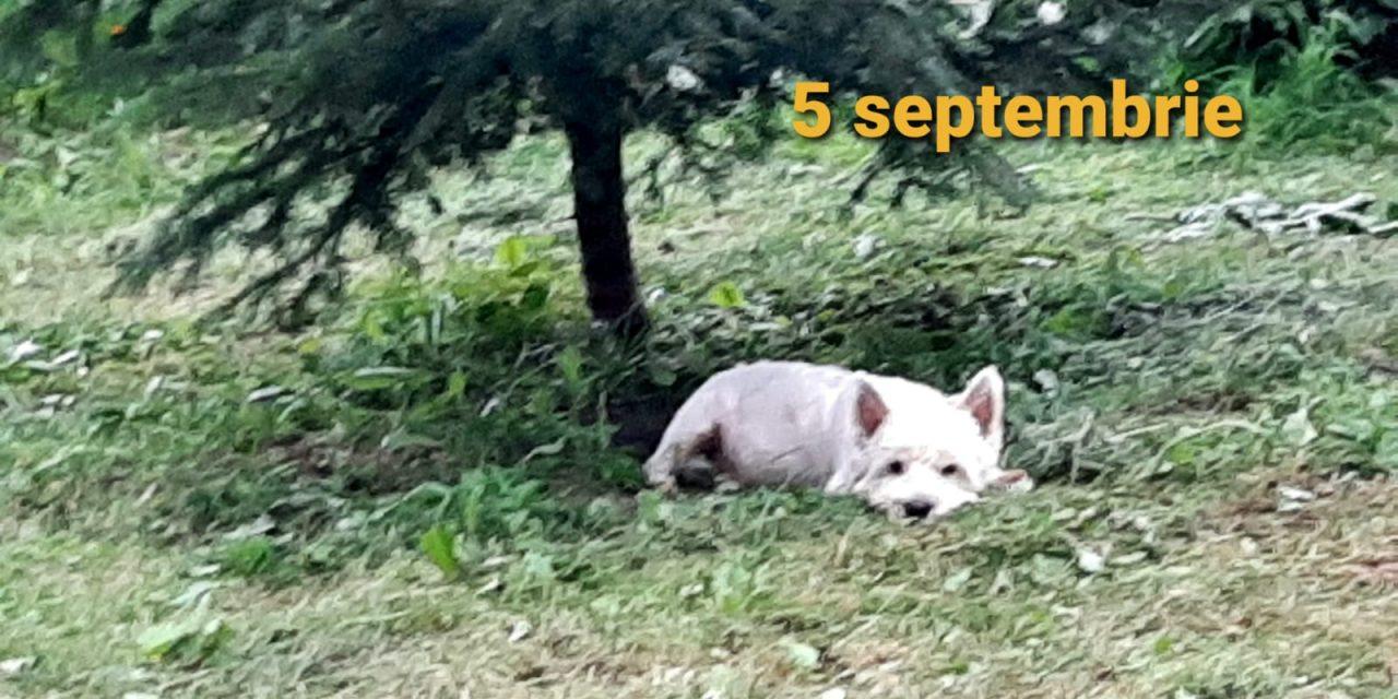 Istoria zilei – 5 Septembrie